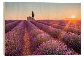 Wood  Sunrise over lavender field - age fotostock