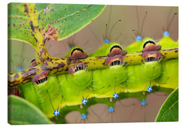 Canvas  Feet of the caterpillar - Buiten-Beeld