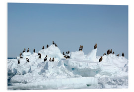 Foam board print  White-tailed eagles on pack ice - Buiten-Beeld