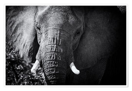 Premium poster Elephant at the waterhole