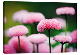 Canvas print  Pink daisies - age fotostock