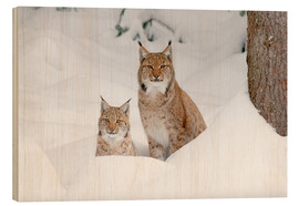 Wood  Lynx in the snow - age fotostock