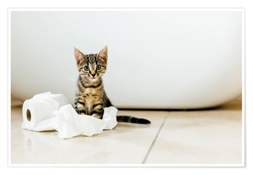 Premium poster Kitten playing with toilet paper