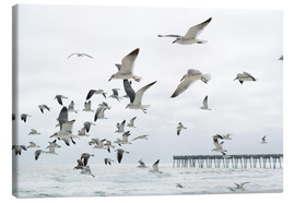 Canvas print  Swarm of seagulls - Image Source
