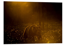 Foam board print  Brown bear in the forest - Cultura/Seb Oliver
