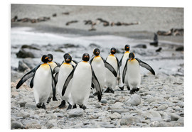 Foam board print  Penguins on the beach - ES Pictures