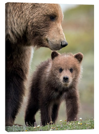 Canvas print  Grizzly with cub - Doug Lindstrand