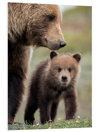 Doug Lindstrand - Grizzly with cub