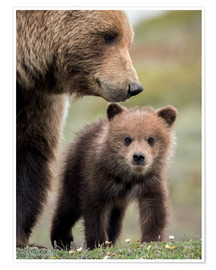 Premium poster  Grizzly with cub - Doug Lindstrand