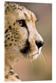 Acrylic print  Profile of a cheetah - Janet Muir