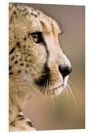 Foam board print  Profile of a cheetah - Janet Muir