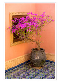 Poster  Bougainvillea in a Mediterranean ambience - Emily M. Wilson