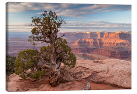 Cathy & Gordon Illg - old juniper in the canyon