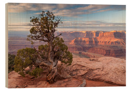 Wood  old juniper in the canyon - Cathy & Gordon Illg
