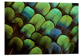 Forex  Green pheasant feathers - Darrell Gulin