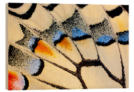 Wood print  Detail of a butterfly wing - Darrell Gulin