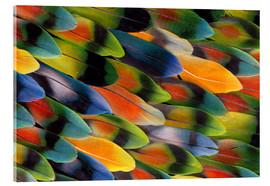 Acrylic glass  colorful parrot feathers - Darrell Gulin