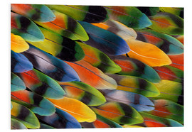 Foam board print  colourful parrot feathers - Darrell Gulin