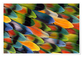 Premium poster colourful parrot feathers