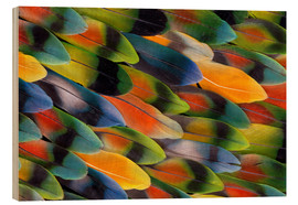 Darrell Gulin - colorful parrot feathers