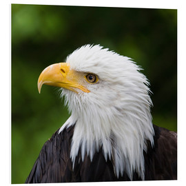 Foam board print  Profile of a bald eagle - Janet Muir