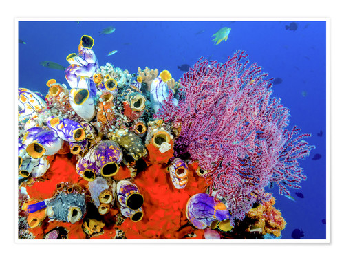 Premium poster Coral reef in Indonesia