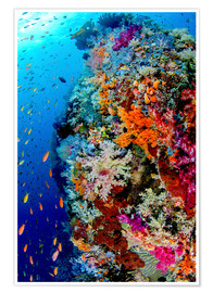 Poster  Fish and coral reef in Indonesia - Jones & Shimlock