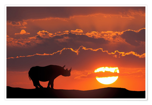 Premium poster White rhino silhouette and sunset in Kenya