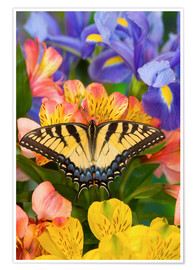 Premium poster Eastern Tiger Swallowtail Butterfly