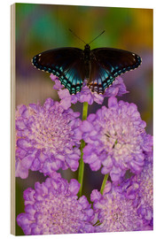 Wood print  Butterfly on lilac flowers - Darrell Gulin