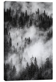 Canvas  Black and white pine forests - Judith Zimmerman