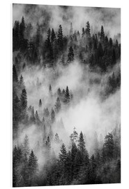 Foam board print  Black and white pine forests - Judith Zimmerman