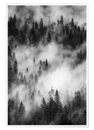 Poster Black and white pine forests