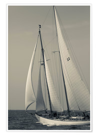 Premium poster Sailboat in the wind at Cape Ann