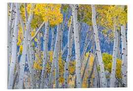 Forex  Birches in autumn - Don Paulson