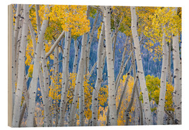 Wood print  Birch groves in the autumn - Don Paulson