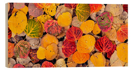 Wood  Aspen leaves in a pool - Don Paulson