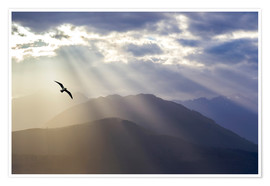 Premium poster Seagull and God rays over the Olympic Mountains