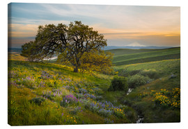 Canvas print  Hills landscape with old oak - Gary Luhm