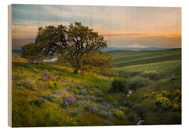 Wood print  Hills landscape with old oak - Gary Luhm