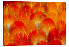 Canvas print  Chest feathers of the Camelot macaw - Darrell Gulin