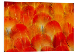 Foam board print  Chest feathers of the Camelot macaw - Darrell Gulin