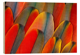 Wood  Wing coloring of an macaw - Darrell Gulin