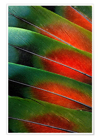 Premium poster  Agapornid tail feathers II - Darrell Gulin