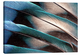 Canvas print  Agaporniden tail feathers - Darrell Gulin