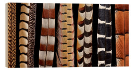 Darrell Gulin - Pheasant Tail feathers lined up
