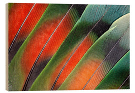 Wood  Fanned out Lovebird feathers - Darrell Gulin