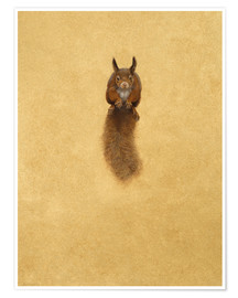 Premium poster Leaping Red Squirrel -
