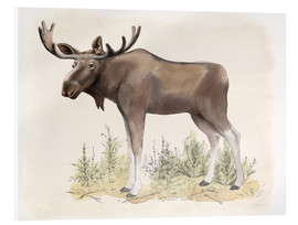 Acrylic print  Wilderness Collection Moose - Beth Grove