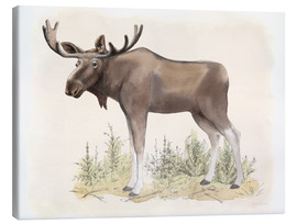 Canvas print  Wildlife - moose - Beth Grove